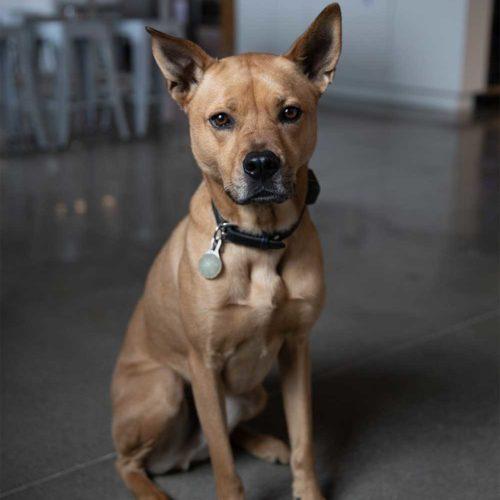 porter office dog